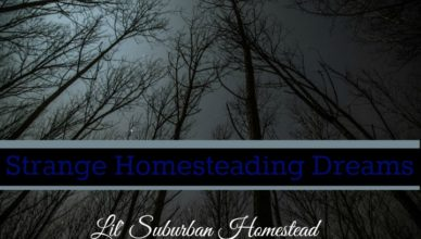 strange homesteading dreams