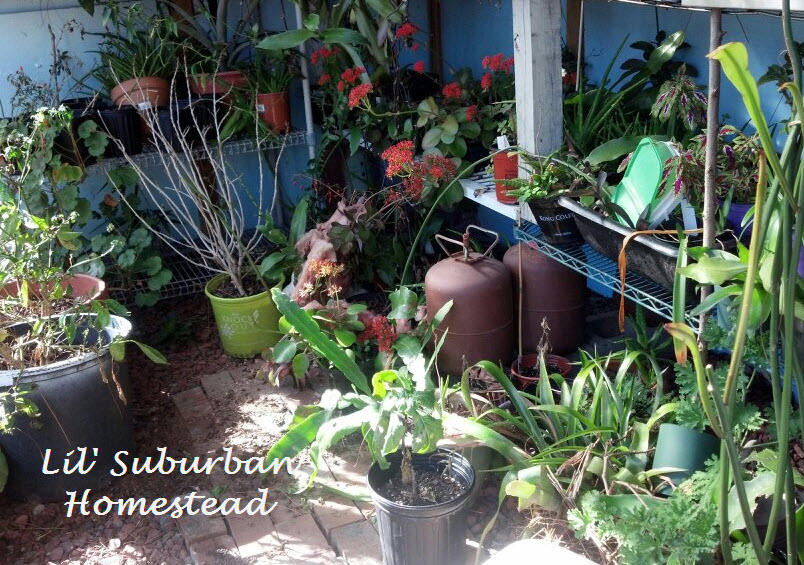The cluttered greenhouse