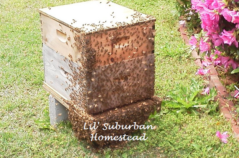magical moment in the life of a beekeeper lil 39 suburban homestead