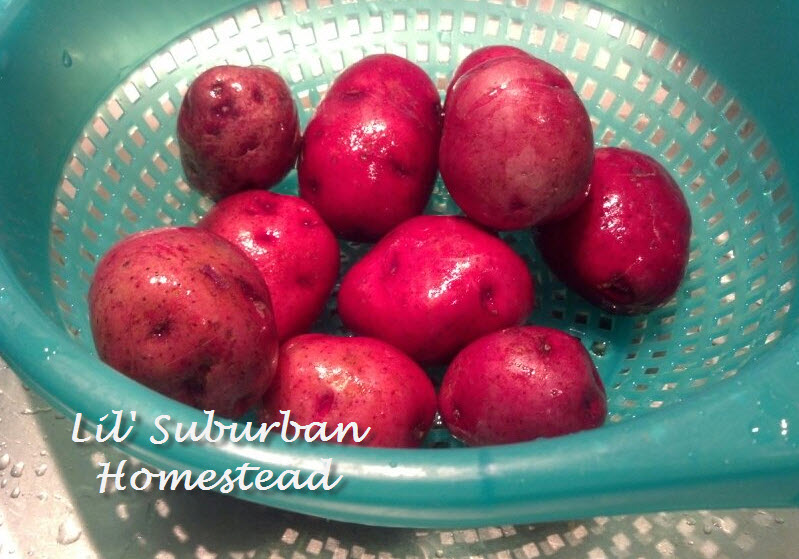 you need about 8 to 10 red skinned potatoes
