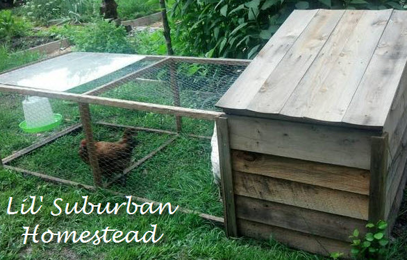 side view of the chicken tractor