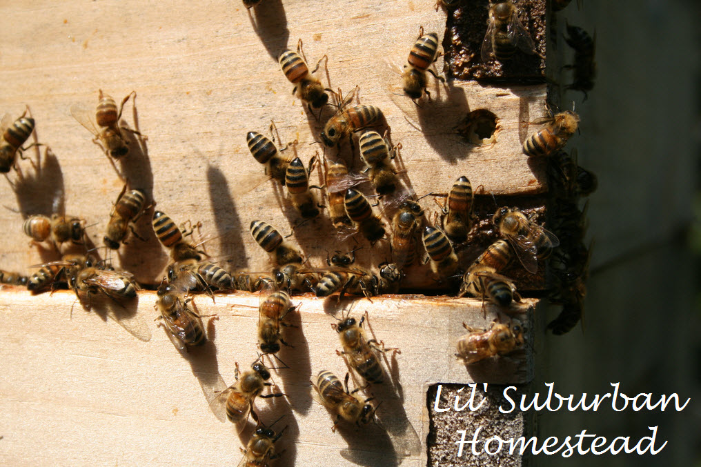 another close up of our bees