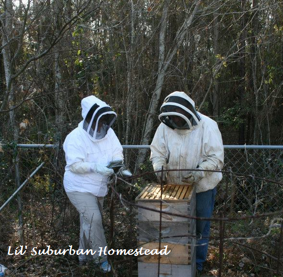 My husband teaching me the ropes with hands on beekeeping
