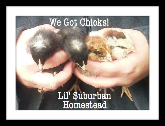 Our chicks