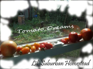 tomatoes on sill