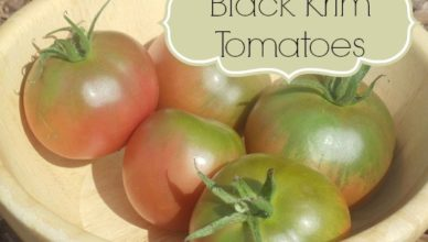 black krim tomatoes timber creek farmer