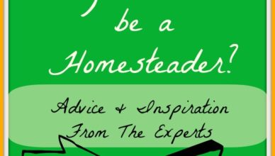 so you wanna be a homesteader Lil' Suburban Homestead