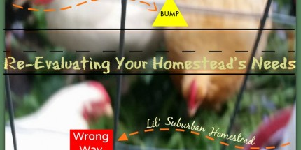 re-evaluating your homestead's needs