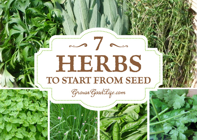 7-herbs-to-start-from-seed-growagoodlife