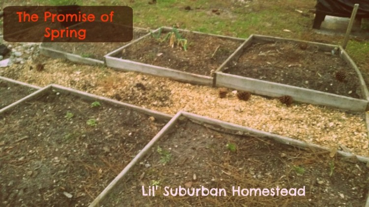 lilsuburbanhomesteadspringcleaningday