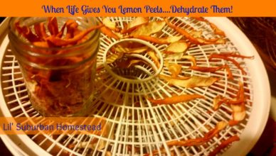 when life gives you lemon peels dehydrate them