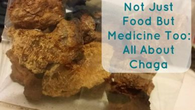 mushrooms as medicine all about chaga