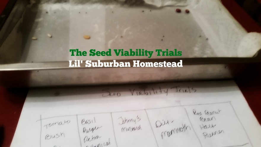 the seed viability test