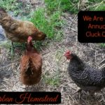 We are on the 5th Annual Coastal Cluck Coop Tour!