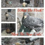 What The Flock? Meet the new gals