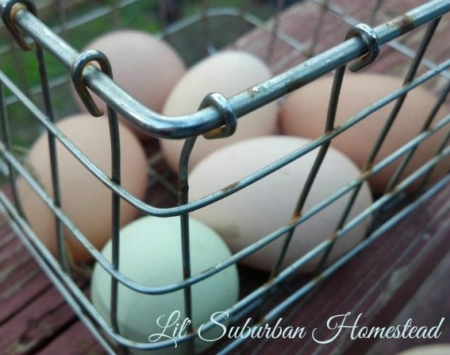 Fresh Eggs on our Lil' Suburban Homestead