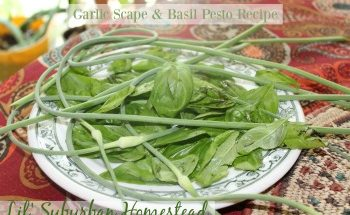 Garlic and Basil Pesto Recipe from Lil' Suburban Homestead
