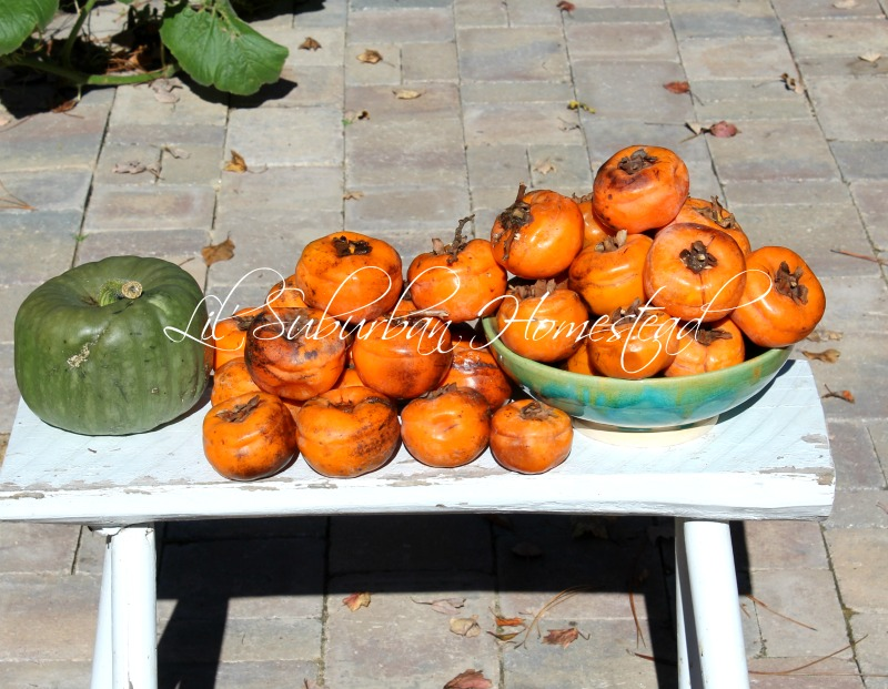 A Plethora Of Persimmons