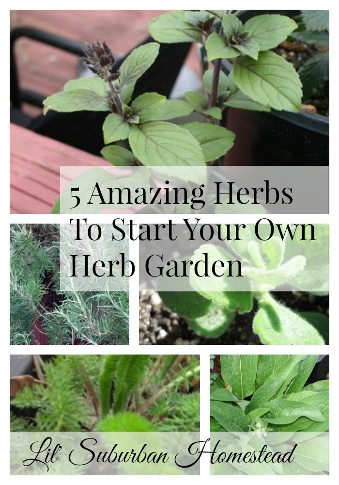 5 amazing herbs to grow in your herb garden