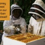 Honey harvest feature