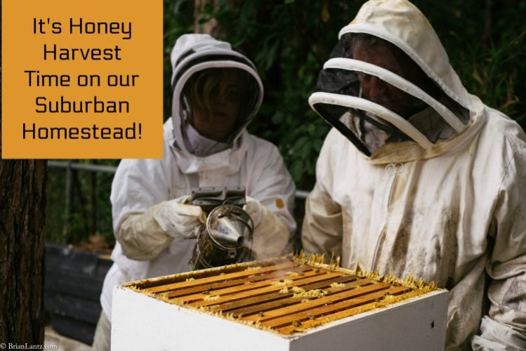 Honey harvest main feature